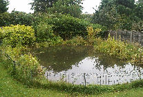 a newly cleared pond