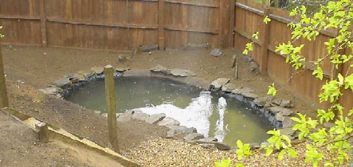 Pond design and construction essential ponds water for Maintaining a garden pond