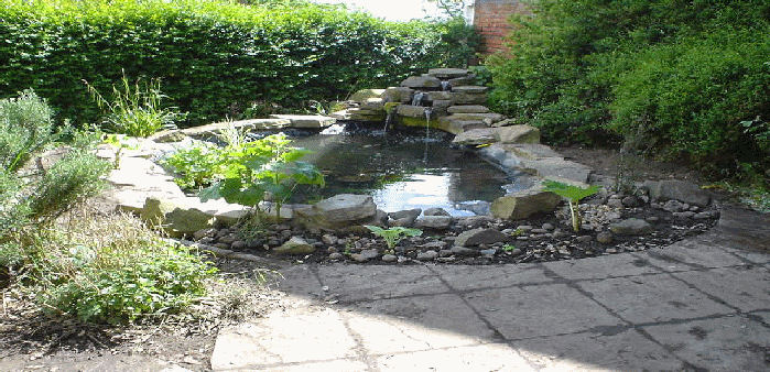 a cleaned pond