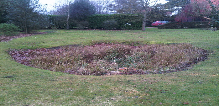 overgrown pond in need of refurbishment